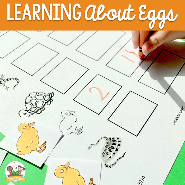 learning about eggs