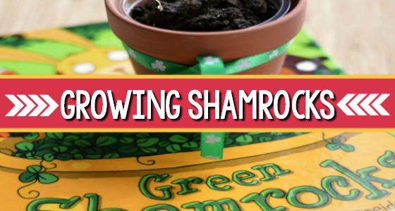 Growing Shamrocks for St. Patrick's Day