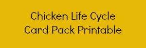 Chicken Life Cycle Printable for preschool