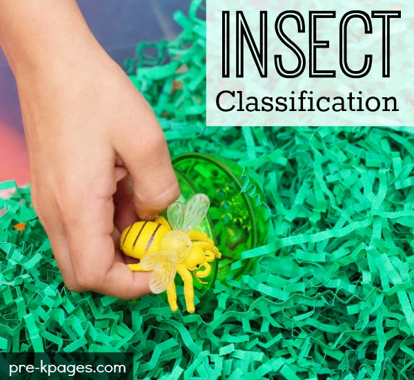 Insect Classification Activity for Preschool