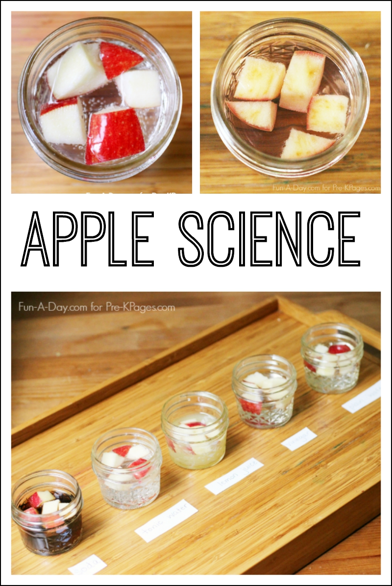 Preschool apple science experiment
