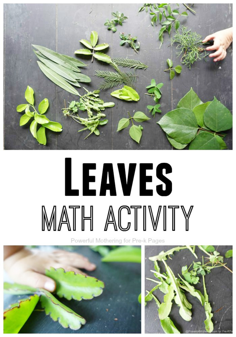 leaves math activity preschool