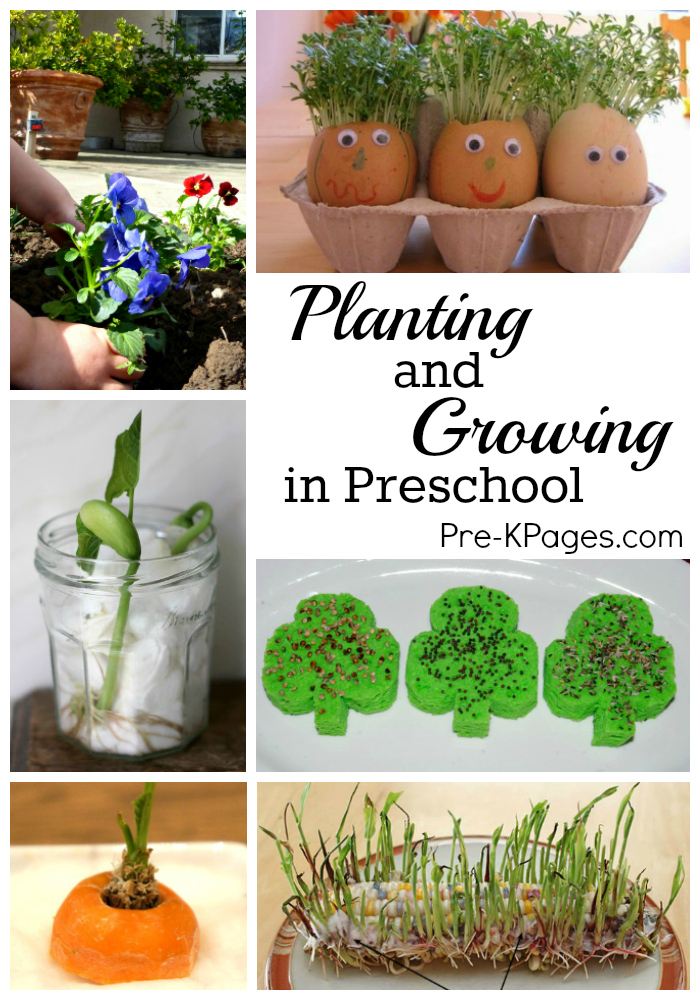 Science For Kids Planting And Growing In Preschool Pre K Pages