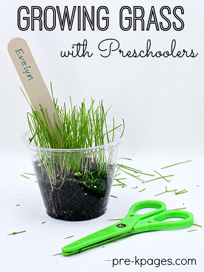grass seed growing in a cup, with scissors and grass trimmings next to it