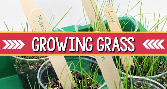 Planting and Growing Grass Indoors in Preschool