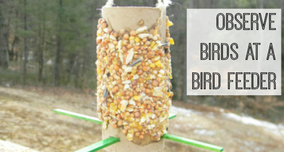 Make a Peanut Butter Bird Feeder and Observe Birds