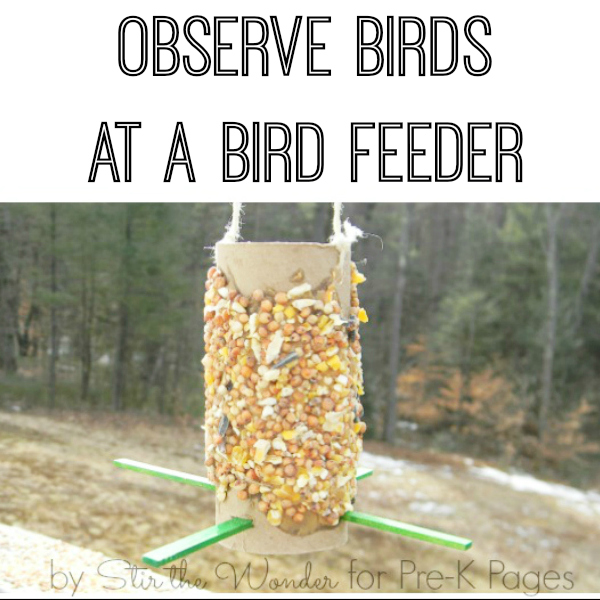 observe birds homemade bird feeder