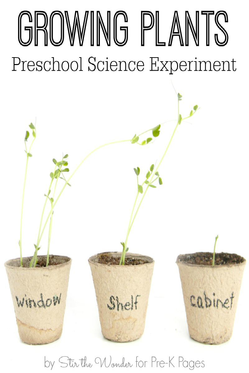Growing Plants Preschool Science Experiment