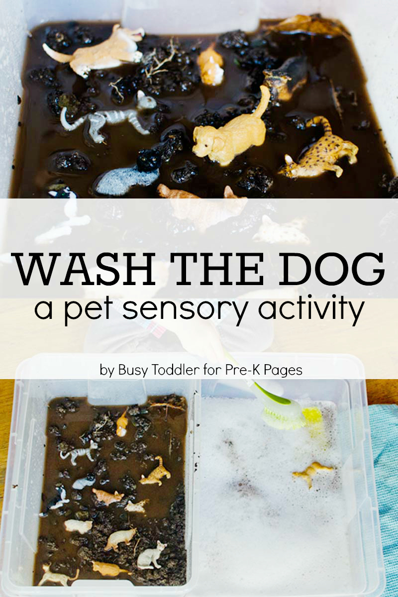 pet theme sensory play for preschool