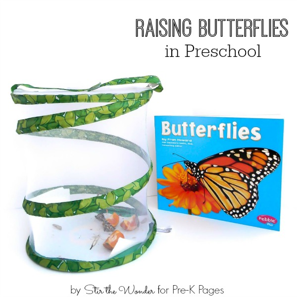 butterflies science for kids