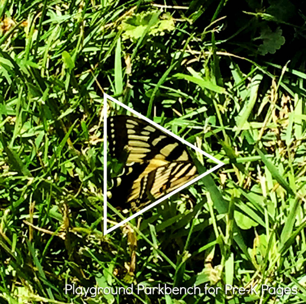 nature shape hunt butterfly
