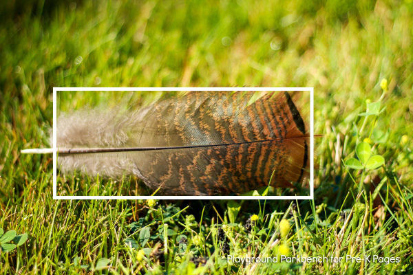 nature shape hunt feather