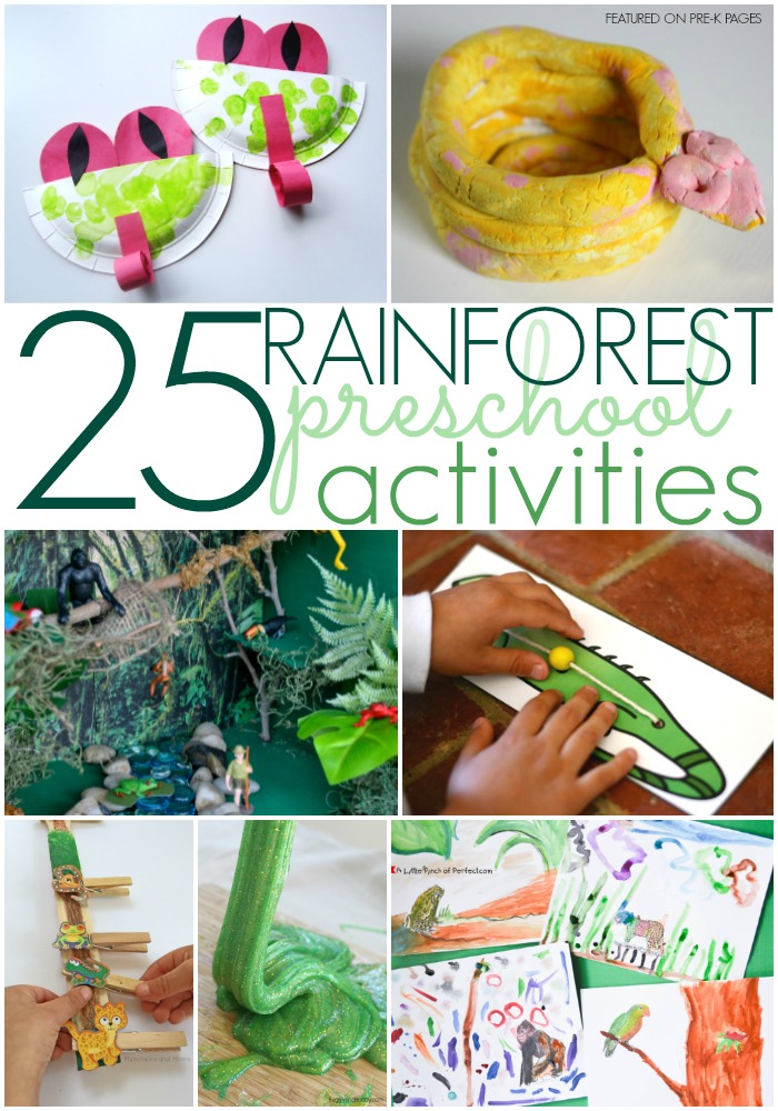 Rainforest Activities For Preschoolers Pre K Pages