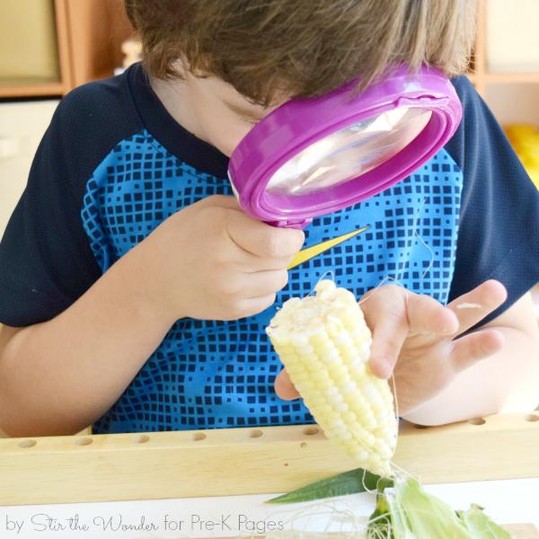 Exploring Corn in science center