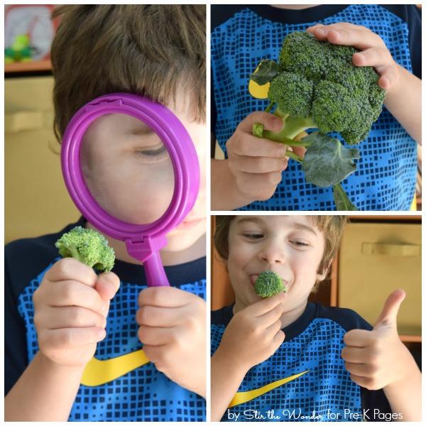 Exploring Vegetables pre-k science activity