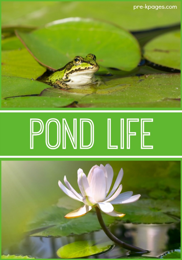 Pond Life Habitat Activities for Preschoolers