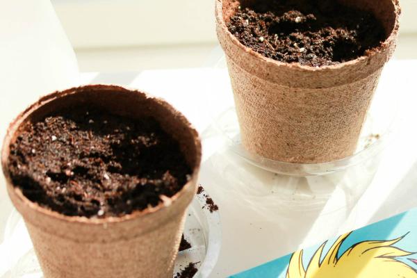 Planting Seeds With Preschoolers