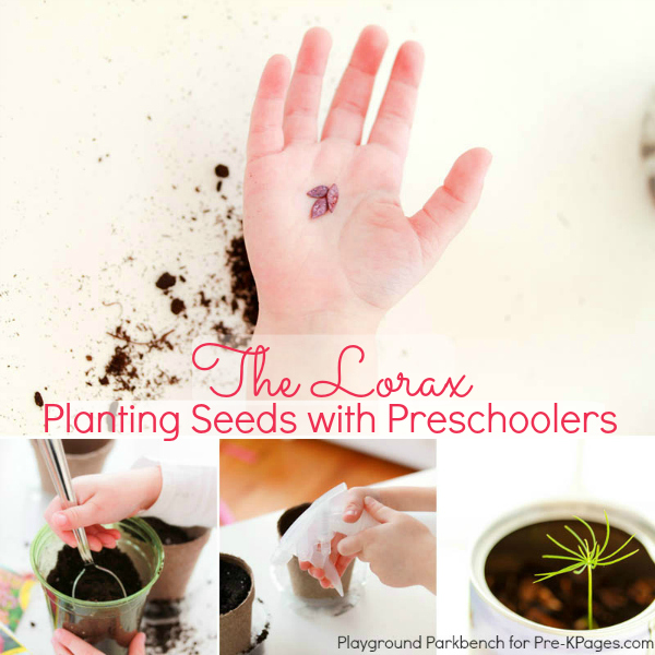 planting seeds preschool the lorax