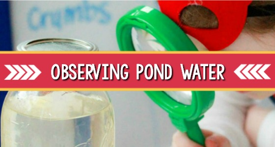 Science for Kids: Observing Pond and Sink Water