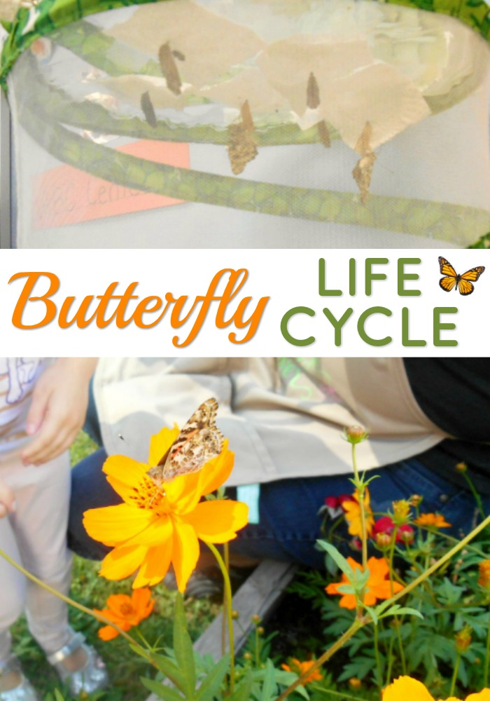 Learning About Butterflies in Preschool