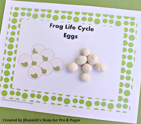 frog life cycle eggs pond
