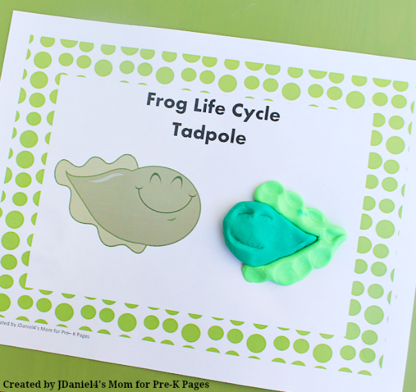 frog life cycle tadpole play dough