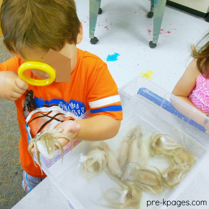Ocean Science with Octopus in the Classroom