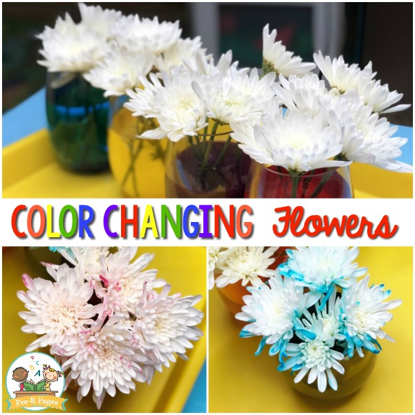 Color Changing Flowers Science Experiment square