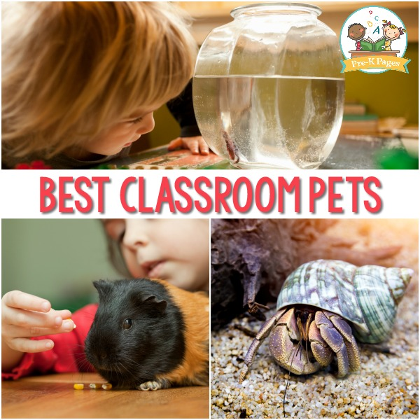 Classroom Pet Ideas for Preschool