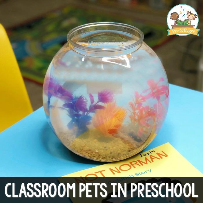 Classroom Pets in Preschool
