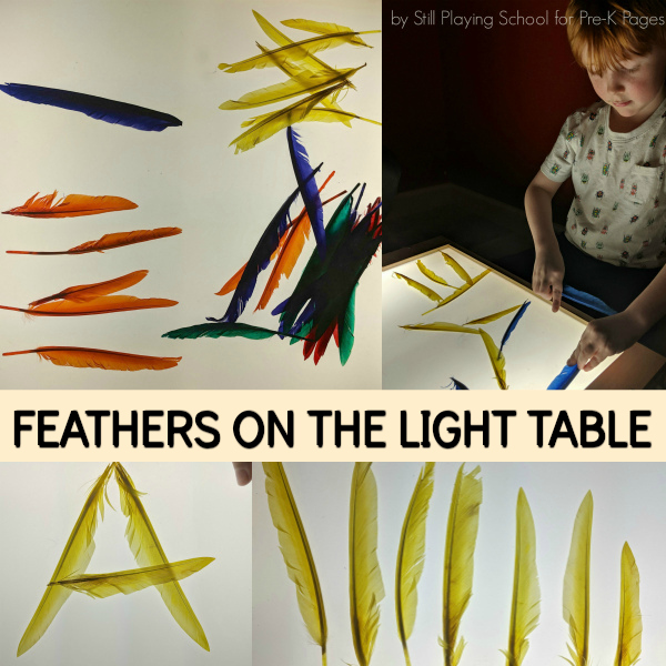 light table science birds pre-k
