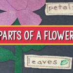flower parts pre-k