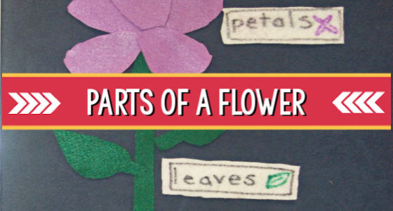 Parts of a Flower: Science Activity for Preschoolers