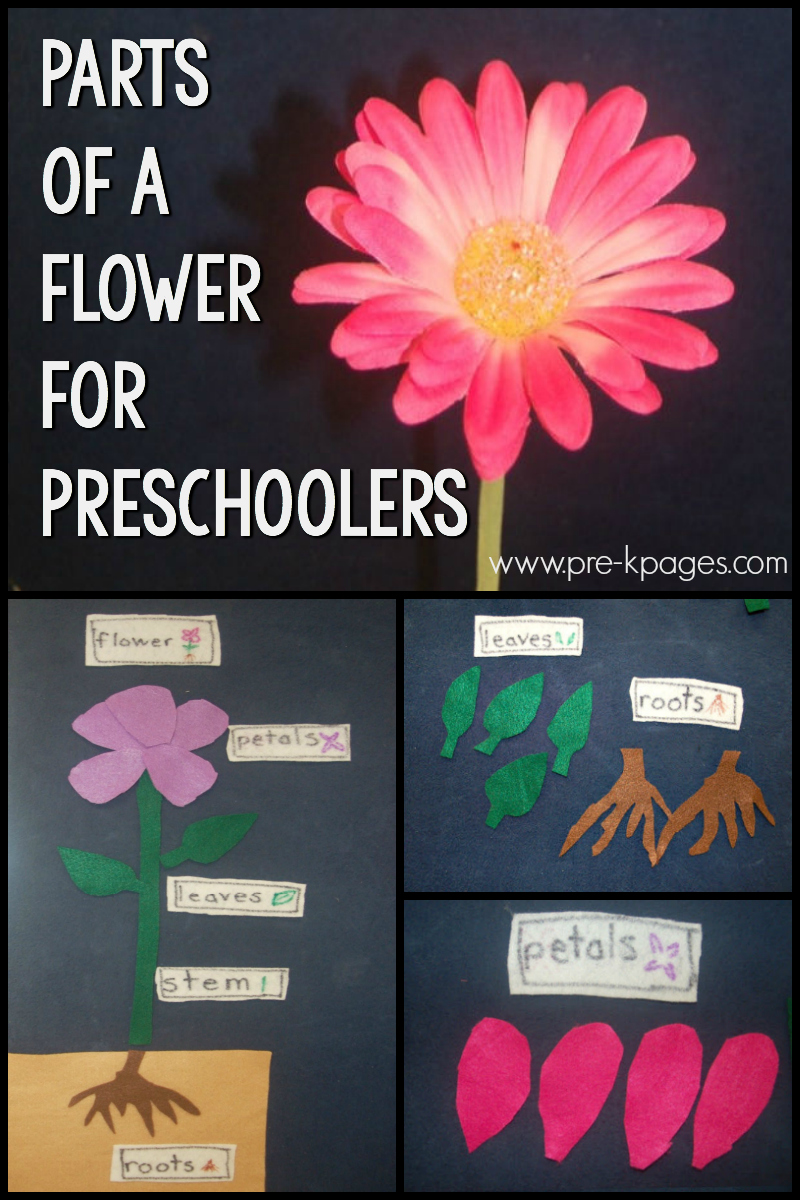parts of a flower for preschool