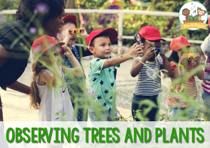 Observing Trees and Plants in Preschool