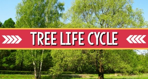Tree Life Cycle Exploration for Preschoolers