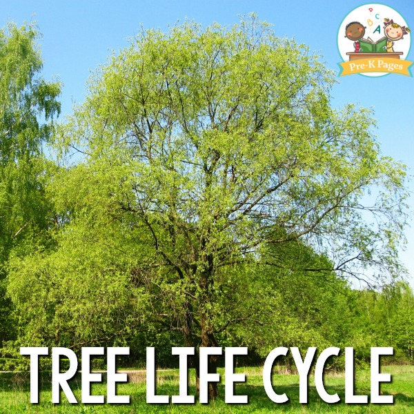 Tree Life Cycle