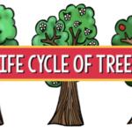 life cycle trees pre-k