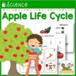 Life Cycle of an Apple Science Lesson