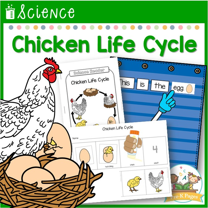 Chicken Life Cycle Science Lesson