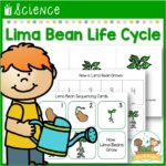Lima Bean Life Cycle Lesson