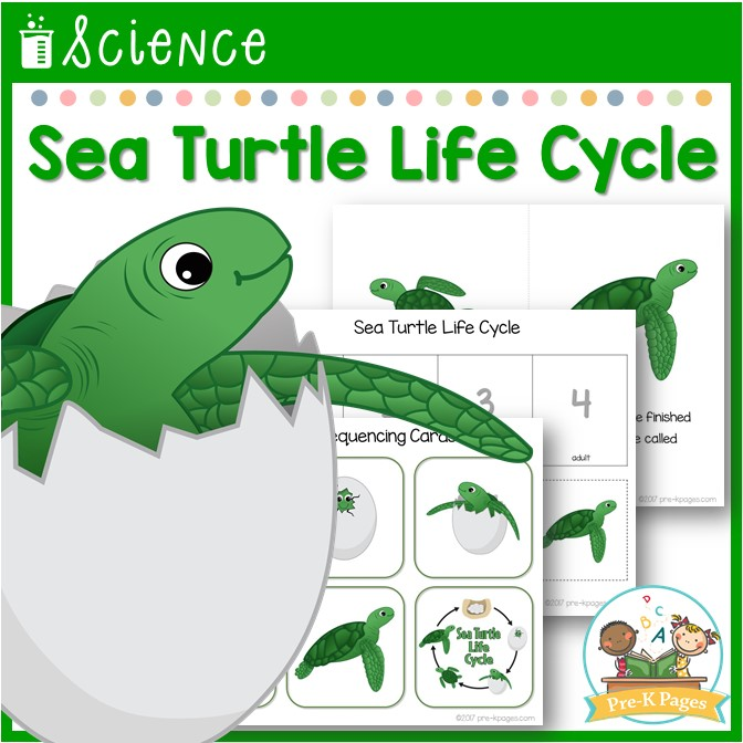 Sea Turtle Life Cycle Science Lesson