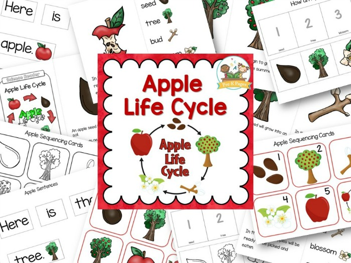 picture regarding Apple Life Cycle Printable titled Apple Lifetime Cycle - Pre-K Web pages