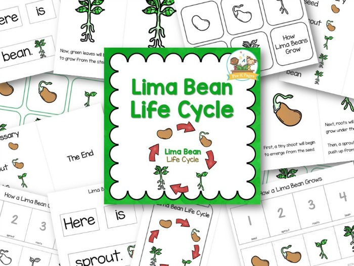 Lima Bean Life Cycle Pre K Pages