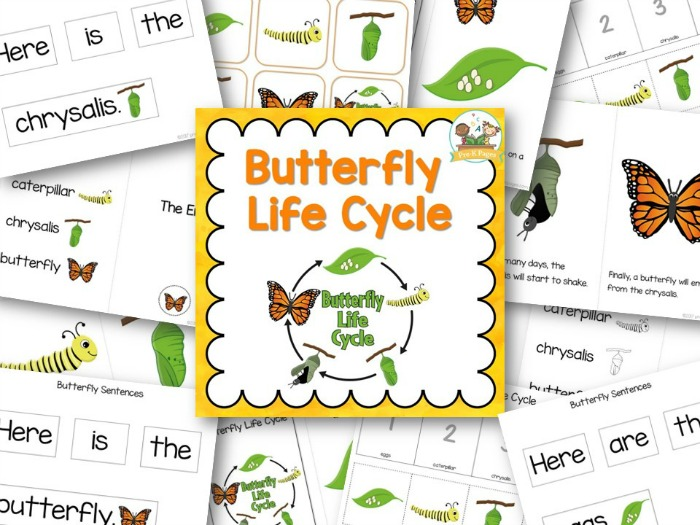 Printable Butterfly Life Cycle Packet