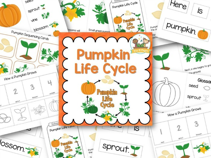 picture regarding Pumpkin Life Cycle Printable referred to as Pumpkin Everyday living Cycle - Pre-K Internet pages