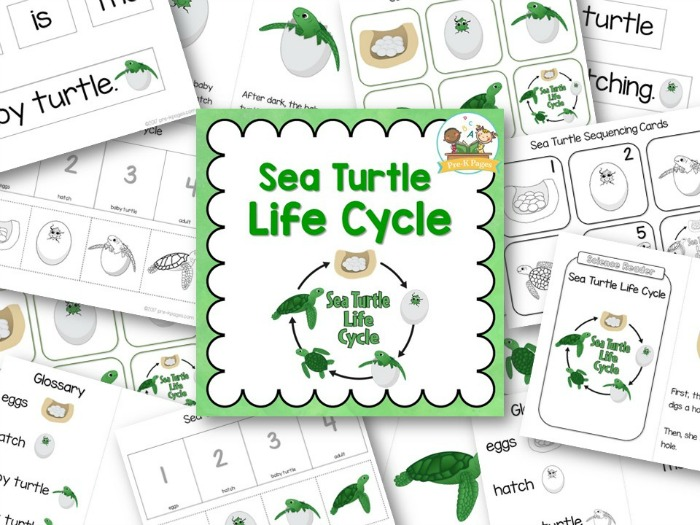 Sea Turtle Life Cycle Printables for Kindergarten