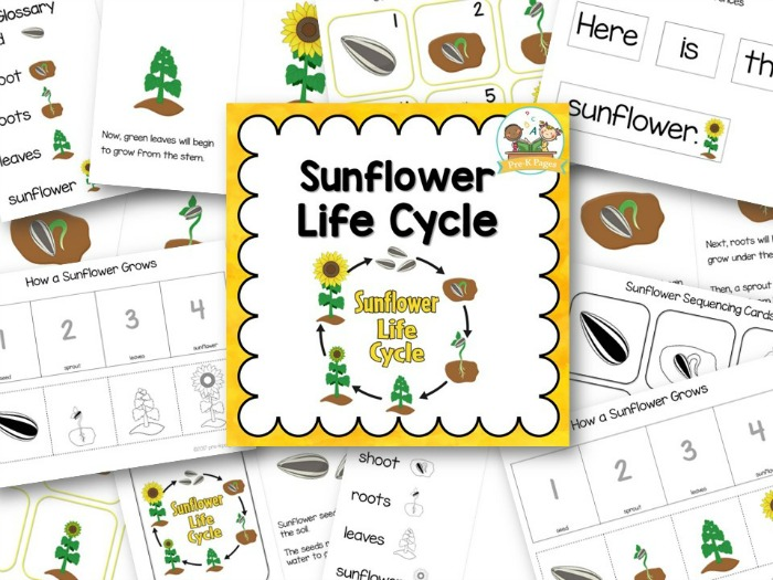Sunflower Life Cycle Printables