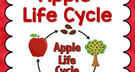 image regarding Apple Life Cycle Printable identify Apple Daily life Cycle - Pre-K Internet pages