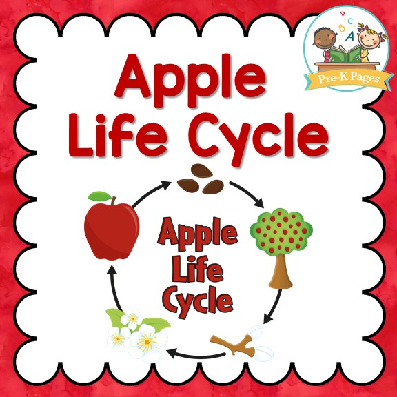 Apple Life Cycle Printables for Preschool